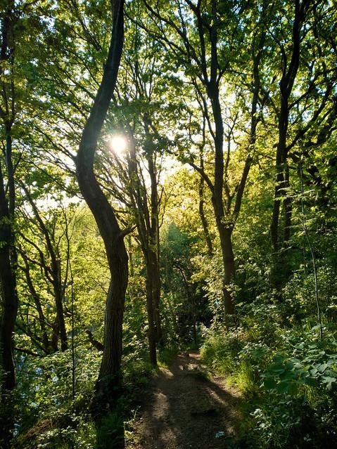 Shaded woodland path