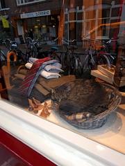Utrecht window kitty