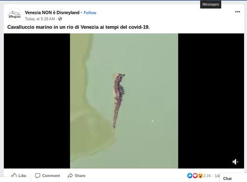 VENEZIA ARCHEOLOGIA e RESTAURO ARCHITETTURA. Cavalluccio marino in un rio di Venezia ai tempi del covid-19 & polpo rilassante nel canale, in: Venezia NON è Disneyland / Facebook (29/04/2020).