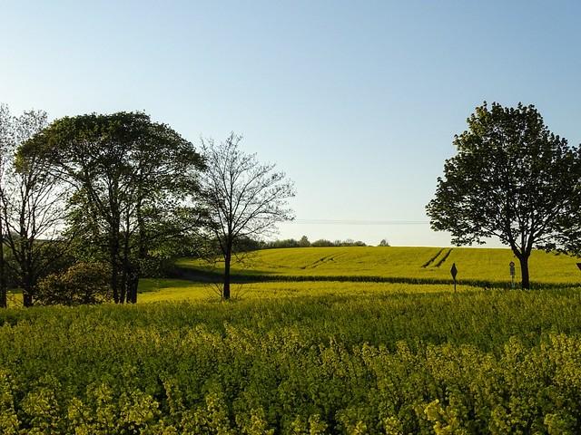 fields of gold💕