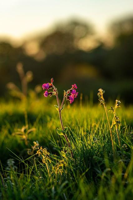 Lone Wild Flower