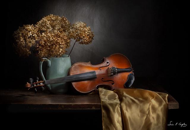 Still life with Violin and Winter Hydrangeas