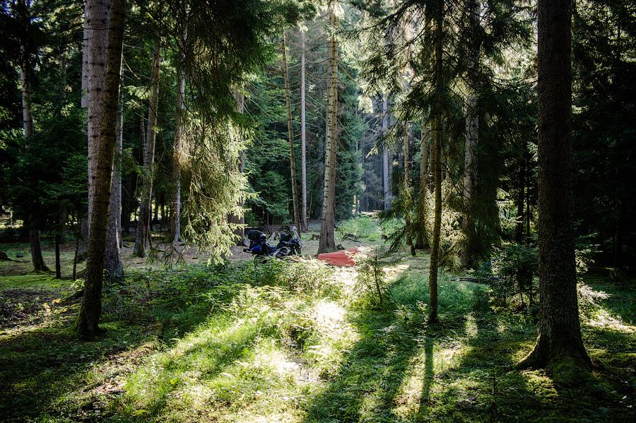 Стоянка в дремучих лесах Боржоми