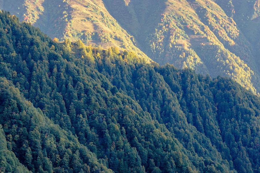 Заповедные леса Кахети