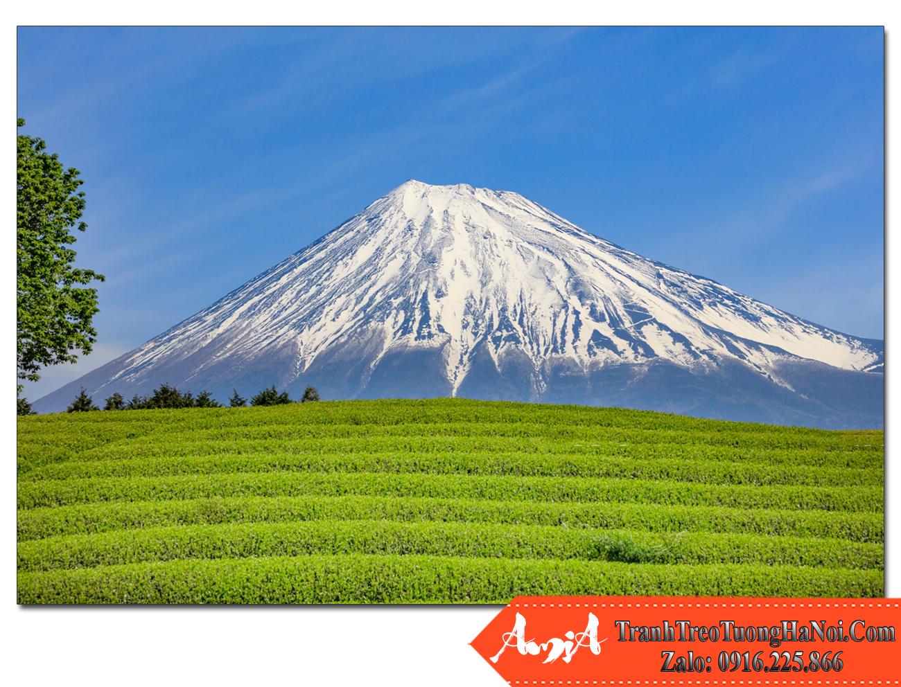 Tranh treo tường núi phú sỹ đồi chè IMAMiya nhật bản Amia NPS111