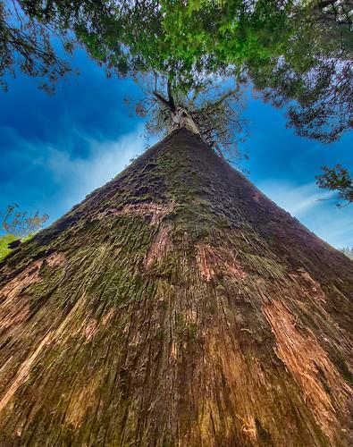 австралия australia melbourne мельбурн пейзаж landscape лес forest эвкалипт eucalyptus dmilokt ins beginnerdigitalphotographychallengewinner storybook