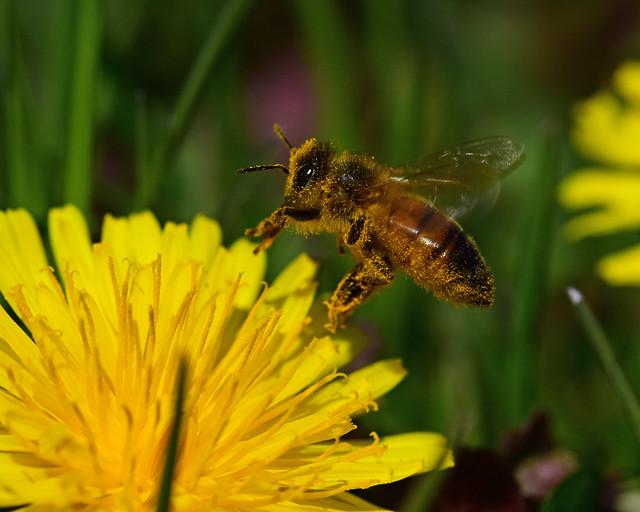 811_0568.jpg= Busy as a Bee