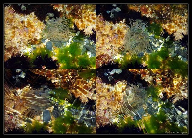 Montage fonds marins avec oursins algues et anémones de mer