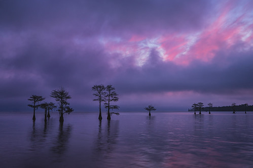 2018 sonyilce7rm2a7rii zeissbatis25mmf2 reallyrightstuff ba72l bh55 rrspcl01 tvc33 clouds landscapephotography nikcollectionbydxo sunset textures trees cypresstree copyright2018 travisrhoadsphotography water southcarolina lakemoultrie