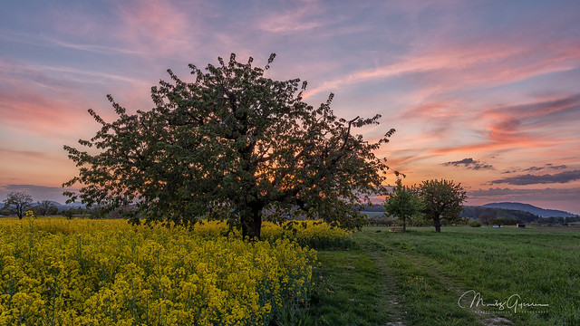 Spring sunset in the Jura