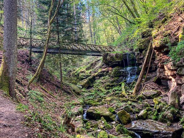 A hike last week with my son.  Photo taken in the Lützenschlucht in Wildberg, Germany