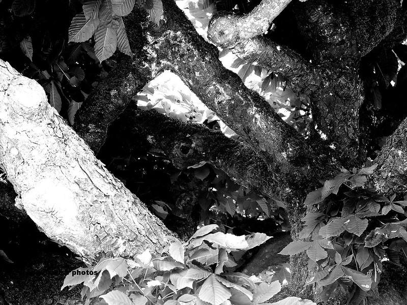 Close up of tree in Feldbrunnen
