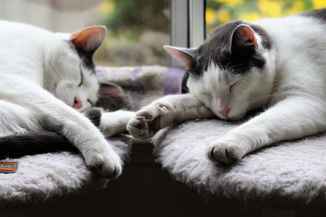 two cats sleeping >^..^<