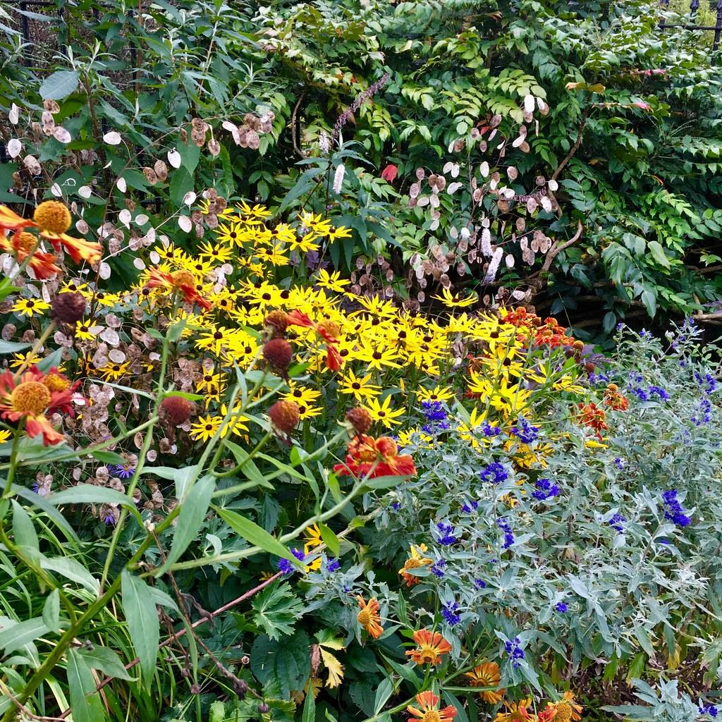 Ravelston garden planting combinations