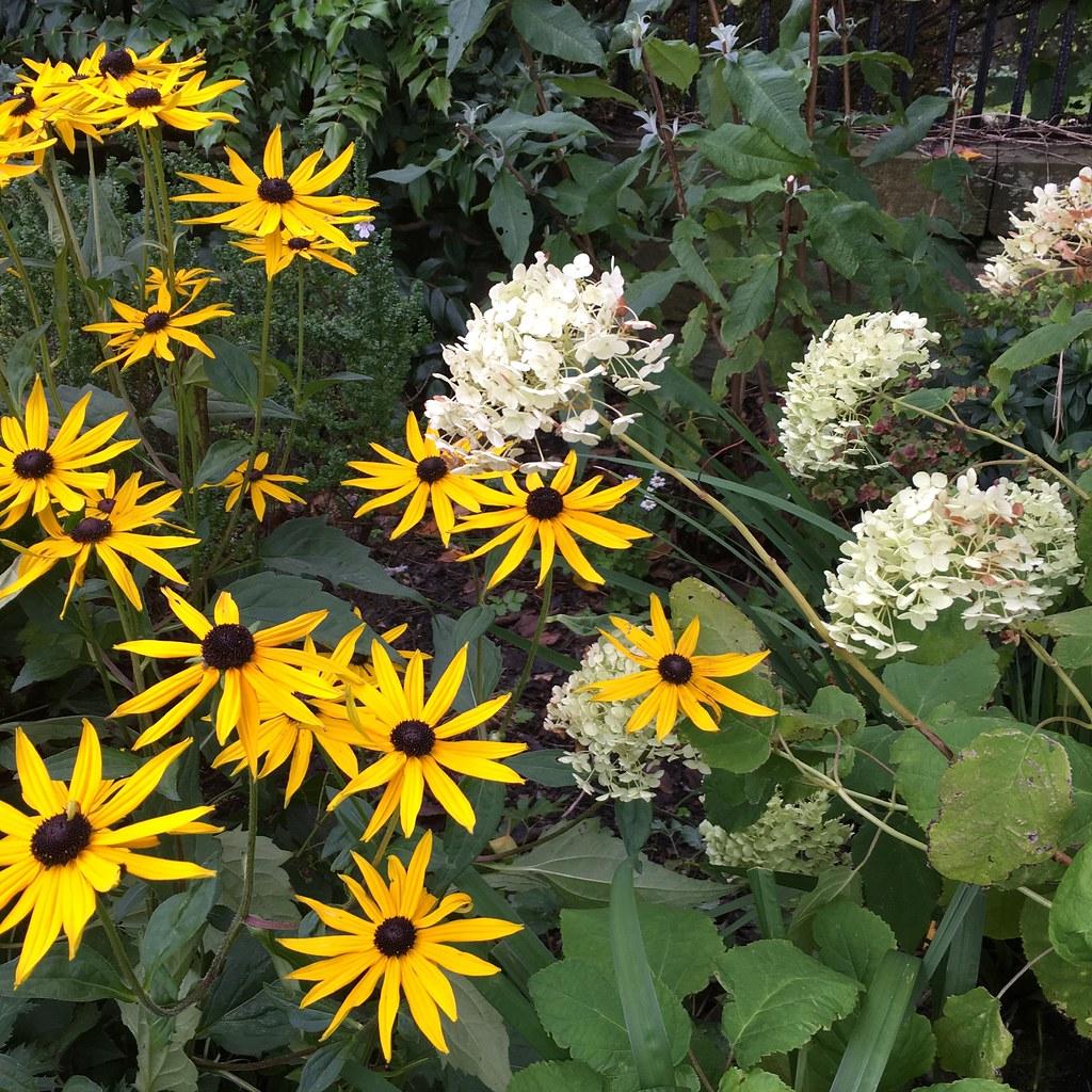 Ravelston garden Plant combo