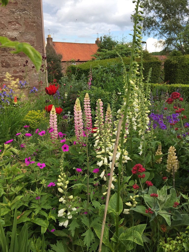 Stenton mid summer garden