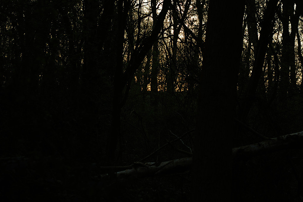 Holywell Woods - 2
