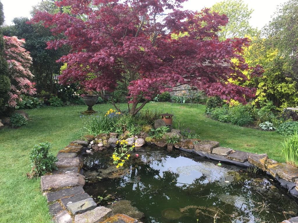 Ravelston large pond Spring