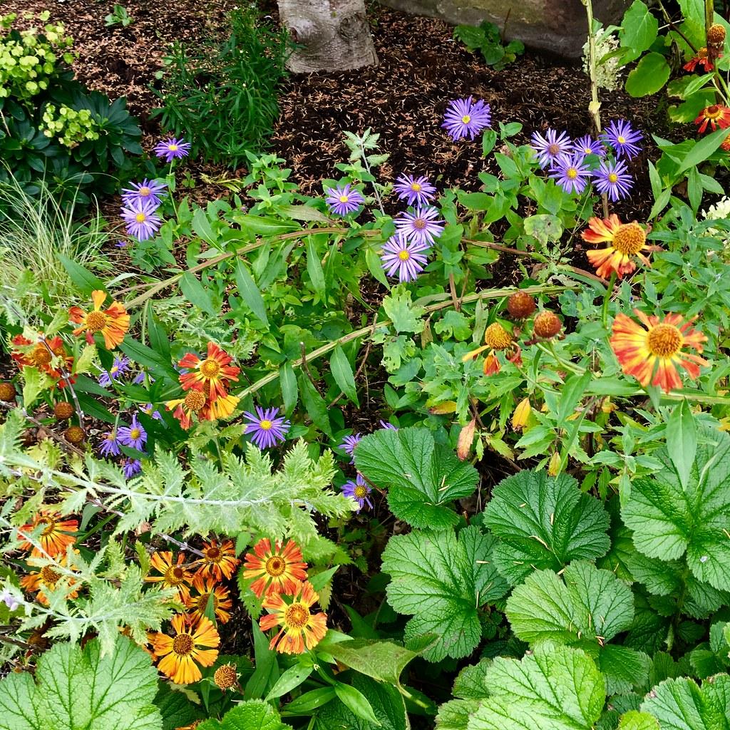 Ravelston garden plant combinations
