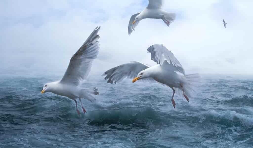 Les courants océaniques propagent les microplastiques