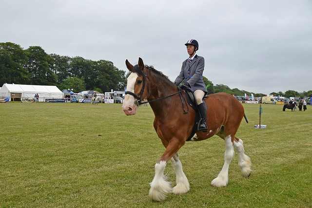 Horses 081 -  Angus Agricultural Show 2018