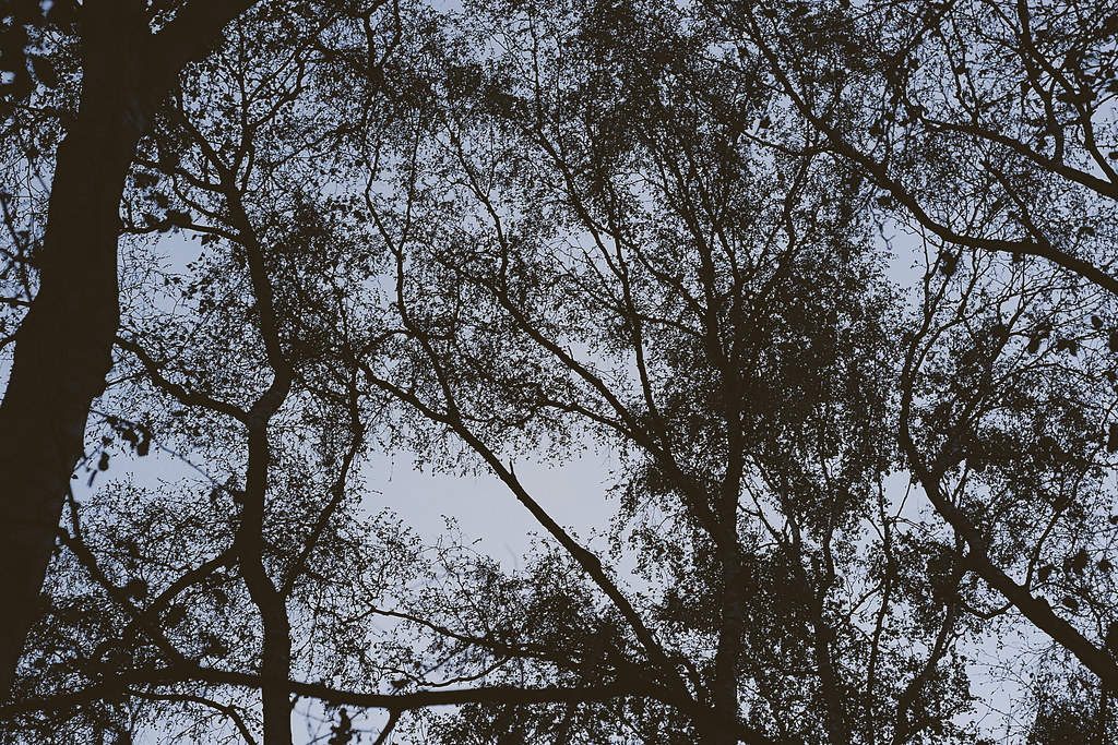 Holywell Woods - 1