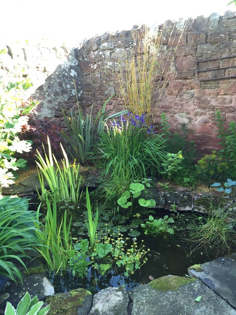 Stenton new pond 6 months in!