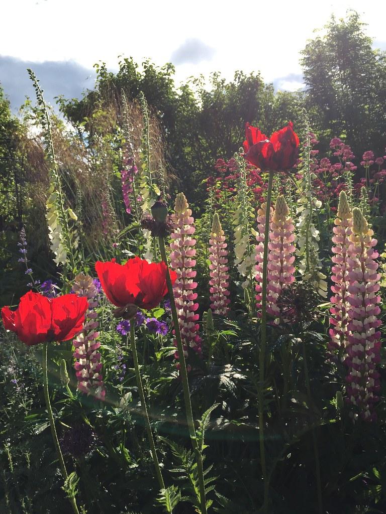 Stenton garden June