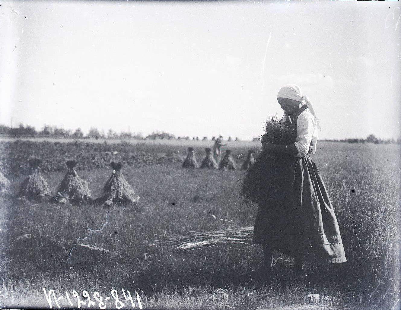 Женщина ставит бабки льна