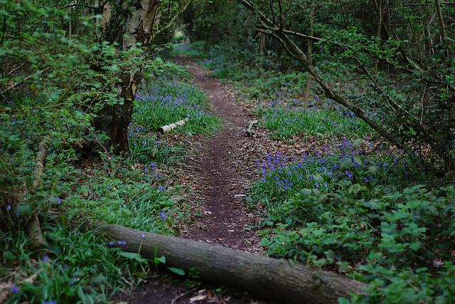Holywell Woods - 3
