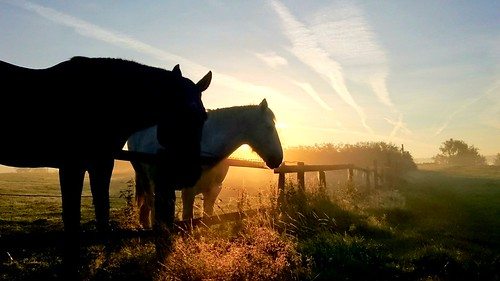 dreamy silhouette england greatbritain uk jessops canon7dii canonphotography mist fog glow colours horses sunrise