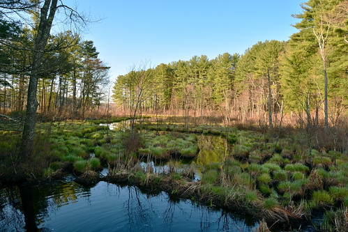 brook pond stream water reflection forest trees sunrise shadow nikon d7200 nikond7200 nikkor massachusetts sturbridge landscape nature wetlands primavera printemps 春