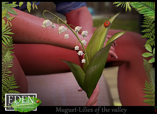 Muguet - Lilies of the valley For Free
