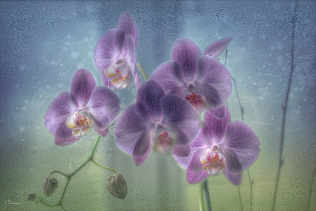 Beautiful Orchid Flower