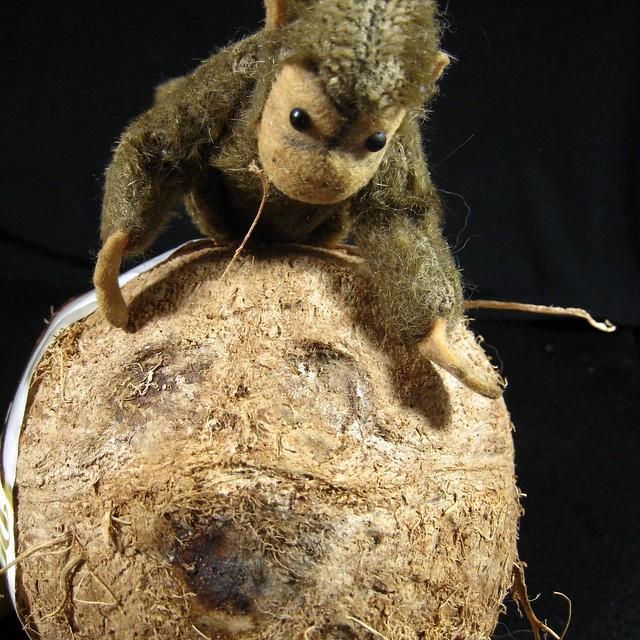 hello, mr. coconut