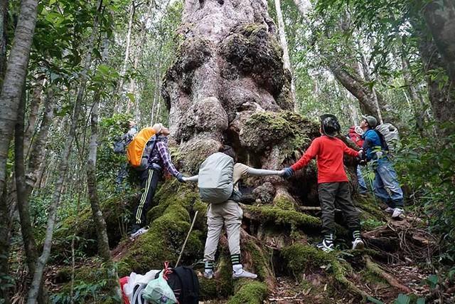 Phượt Hot - Bí kiếp Phượt Đăk Lăk toàn tập – Vẻ đẹp ban mê của núi rừng Tây Nguyên (47)