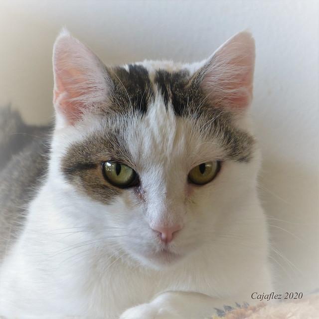 Serious portrait of Jasmijn in serious times.
