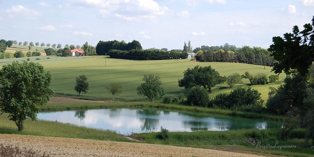Des prés, des champs, des arbres, un petit point d'eau... dans la verte campagne