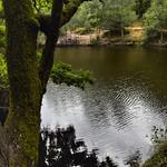 01_The pond
