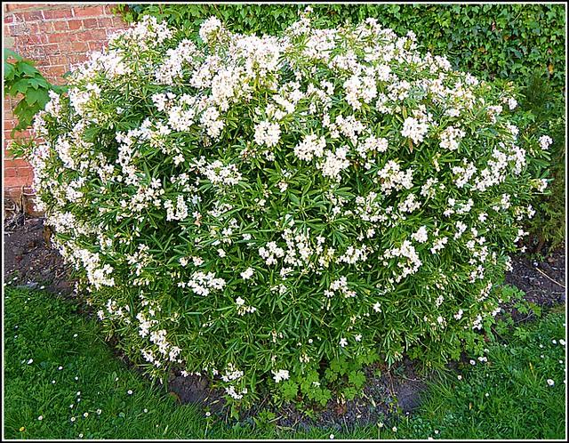 Lovely Shaped Bush ...