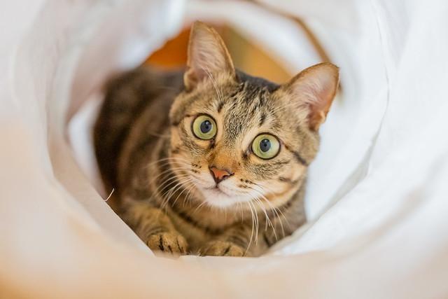 My Cat Lianlian 雙瞳炯炯凝碧
