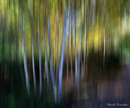 davidsnowdonphotography landscape canoneos80d abstract naturalabstract trees birch mottisfont nationaltrust impression icm hampshire