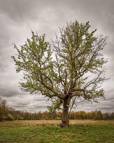 landscape mountloretto statenisland tree d800 sigma 1424mm spring
