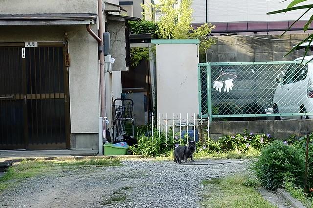Today's Cat@2020ー05ー01