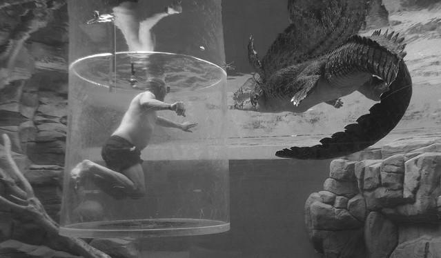 Swimming With A Crocodile