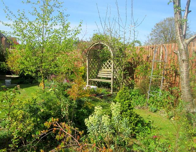 my garden, silver birch, euphorbia, acer