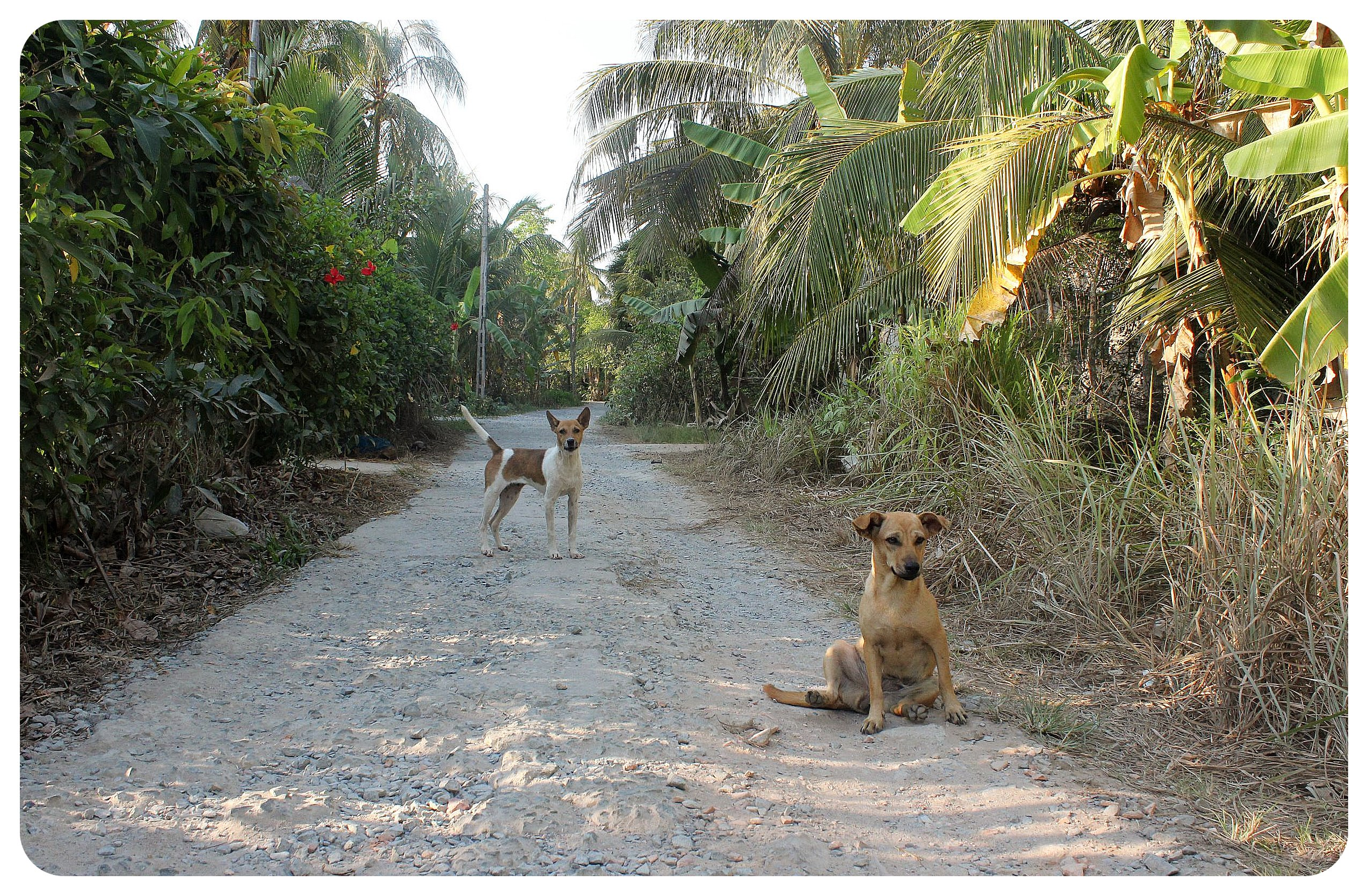 mekong delta dogs