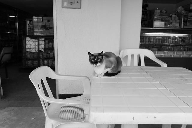 Otro gato.