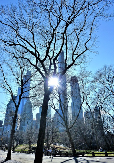Sunlight in New York