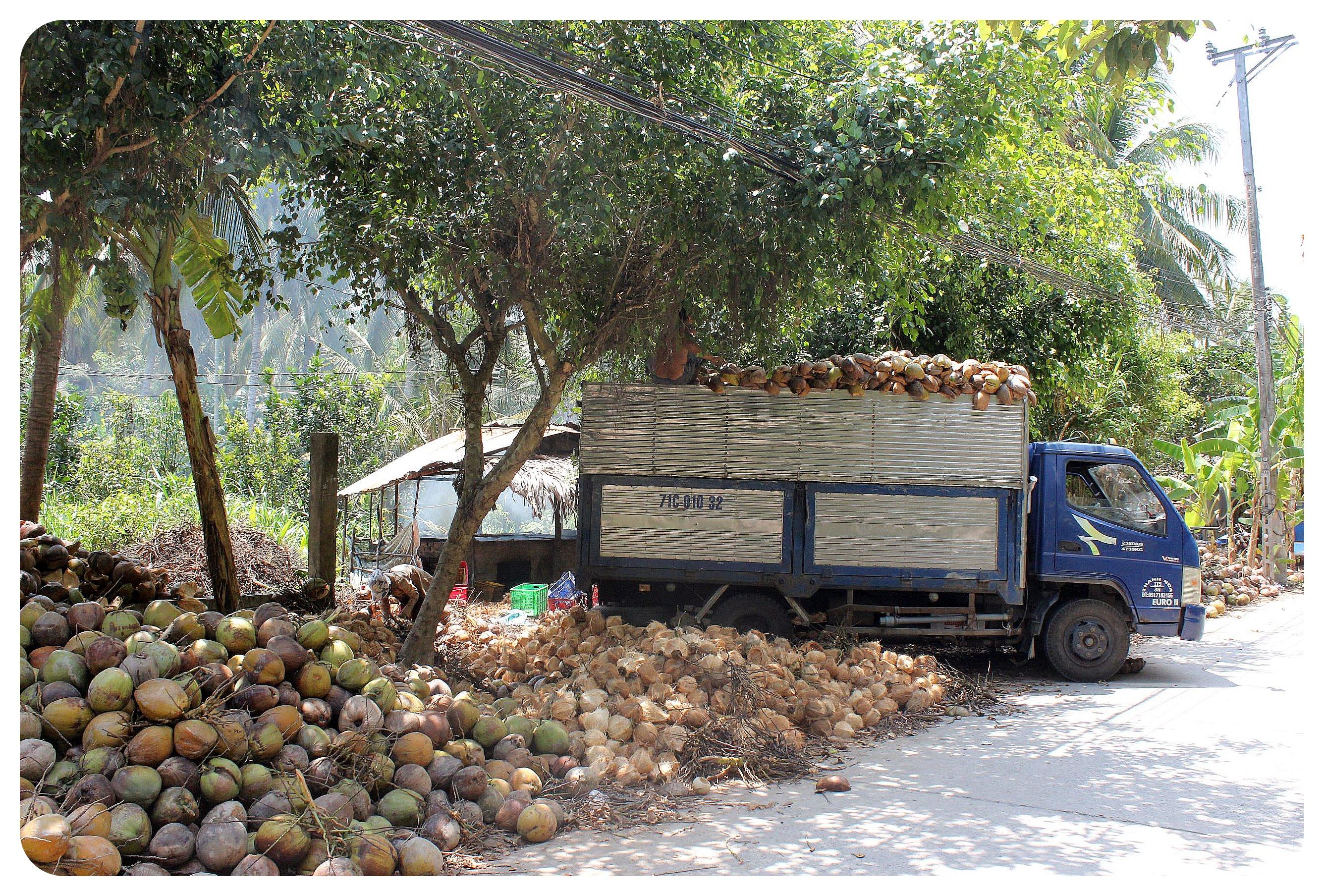 mekong delta coconut truck